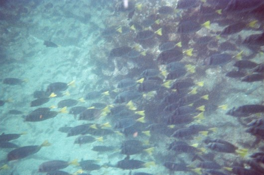 Galápagos snorkelling, photo by Ben Tavener